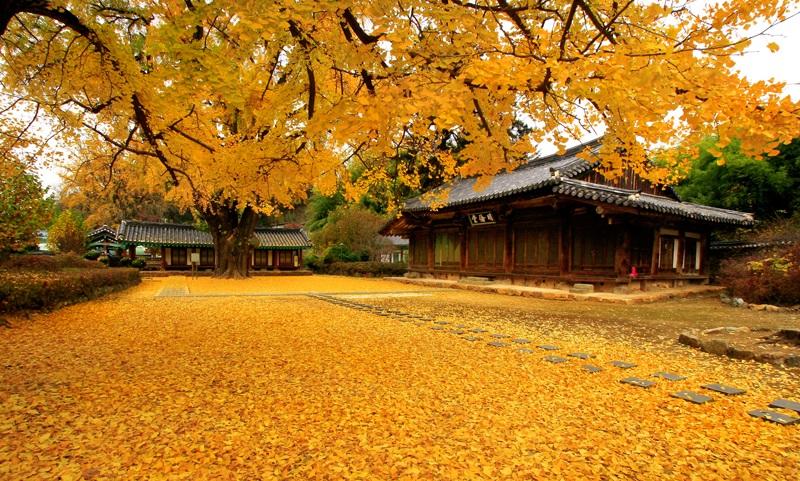 Mùa thu Busan