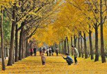 Những điểm ngắm mùa thu đẹp ở Hàn Quốc