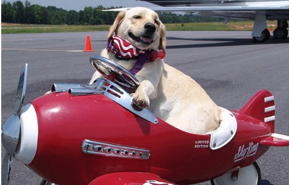 Theo T'way Air hành khách có được đi cùng vật nuôi?
