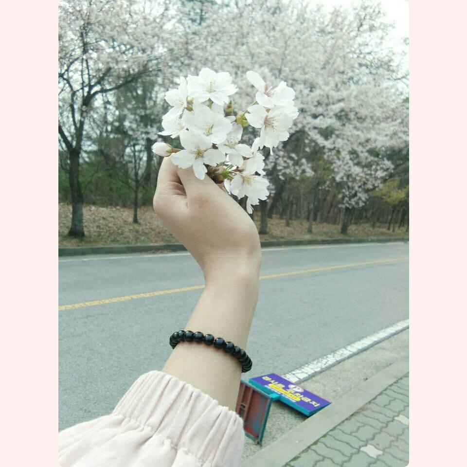 Lễ hội hoa anh đảo ở Công viên Deajeo, Busan